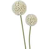 white artificial allium flower stems