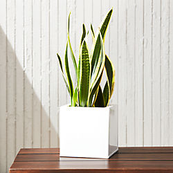 blox square galvanized high-gloss white planter