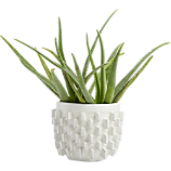 chunky white block planter