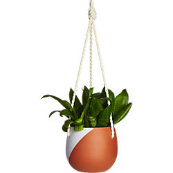 cove hanging planter