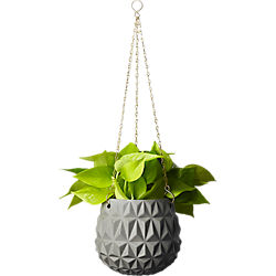 glisan grey hanging planter