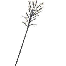 llex berry branch
