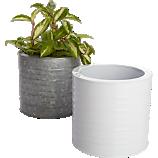 oscar herb planters