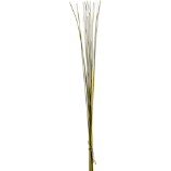set of 25 green palm sticks
