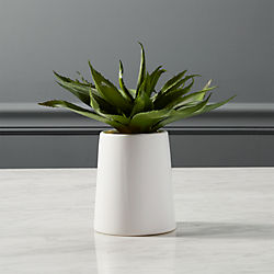 potted aloe