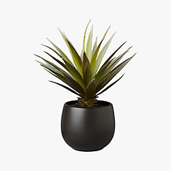 potted succulent with black pot