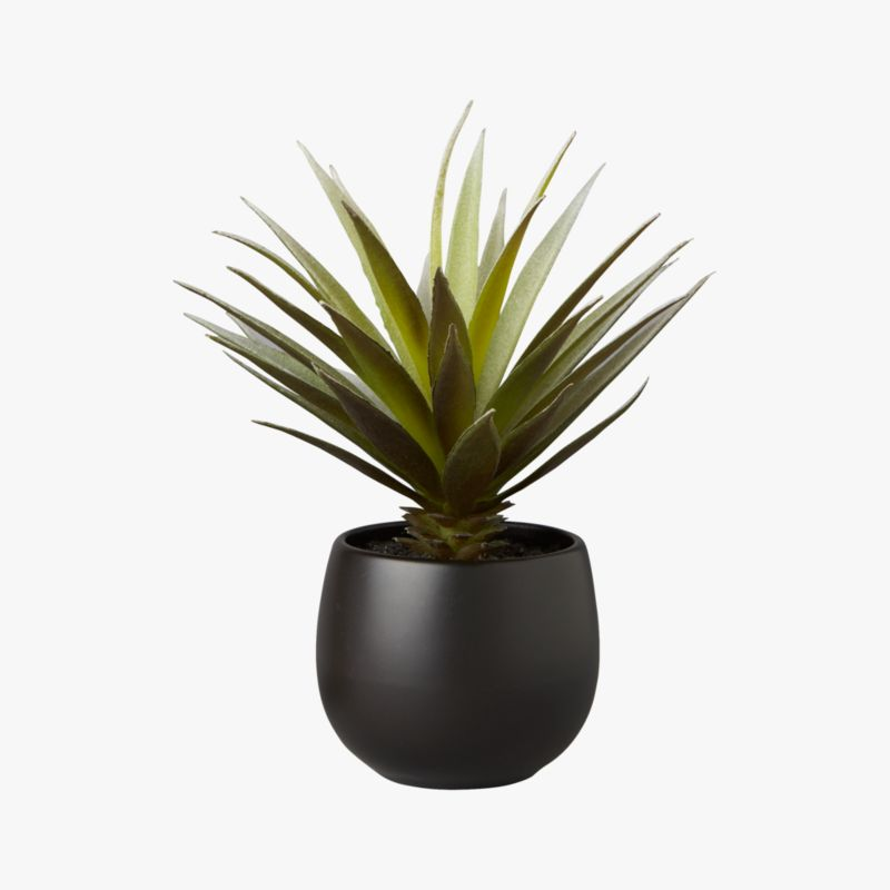 Potted Succulent With Black Pot Cb2