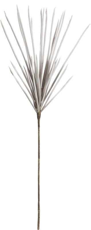 scallion botanical