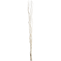 white willow branches
