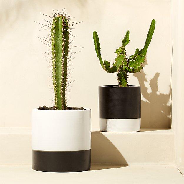 basic planters