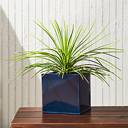 blox high gloss small square navy planter