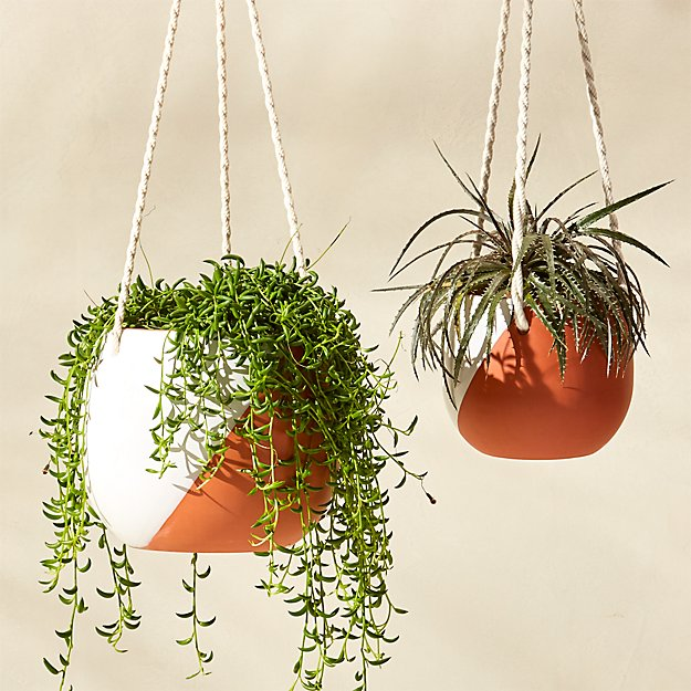 cove hanging planters
