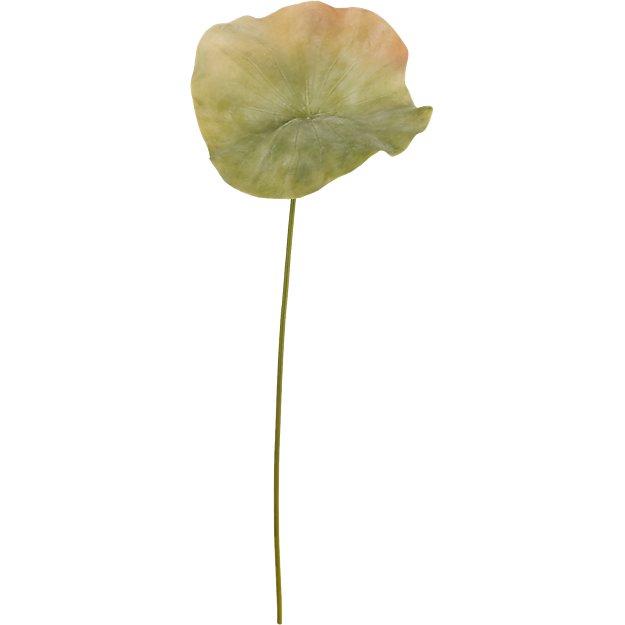 """lotus leaf 33"""""""