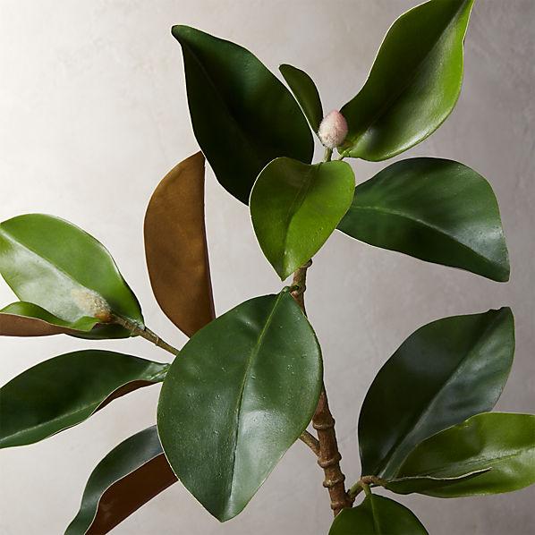 MagnoliaStem30inROF16