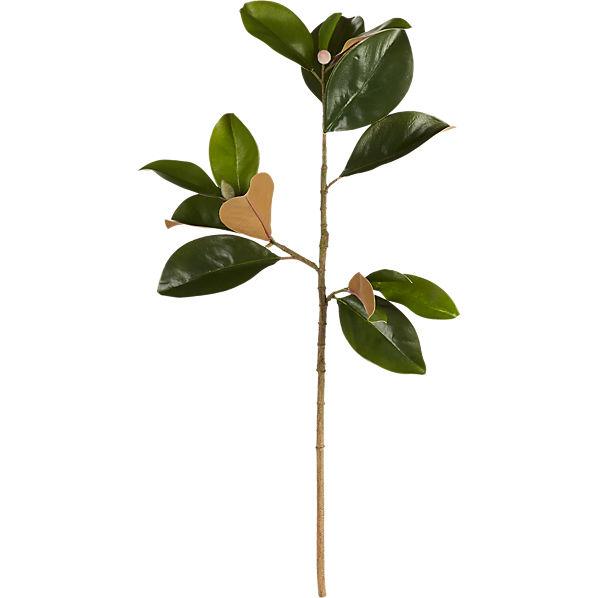 MagnoliaStem30inS16
