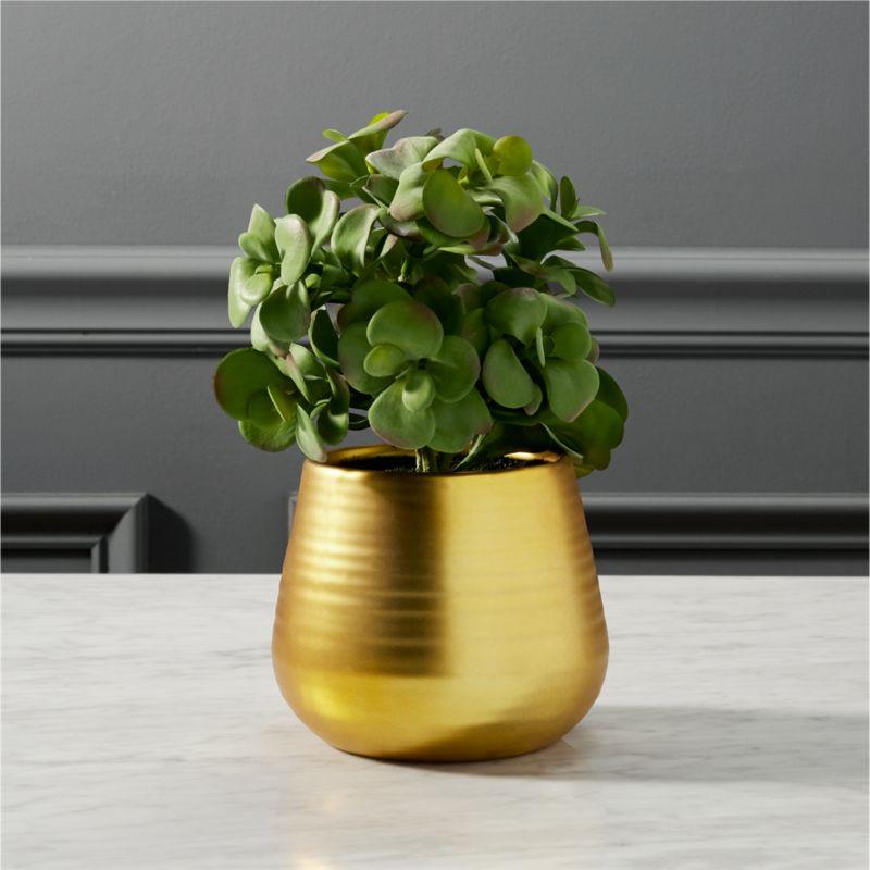 potted eucalyptus plant | CB2