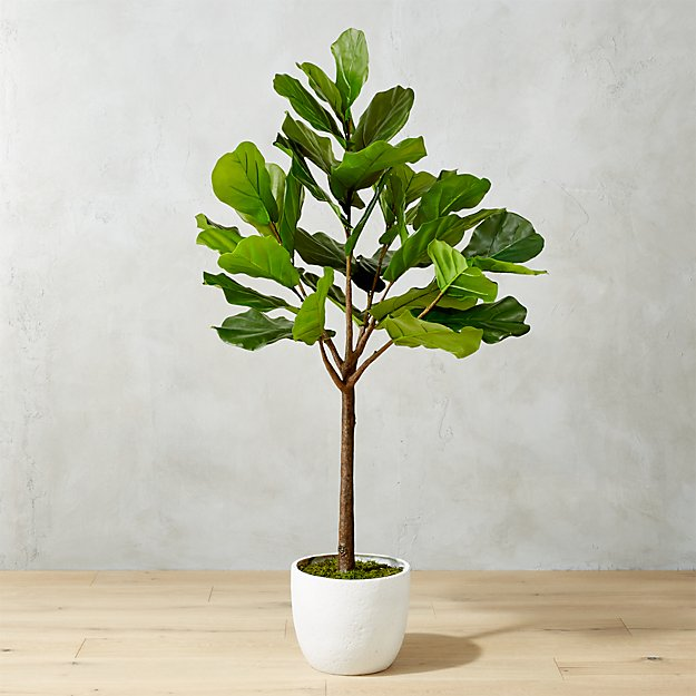 65 Quot Potted Faux Fiddle Leaf Fig Cb2