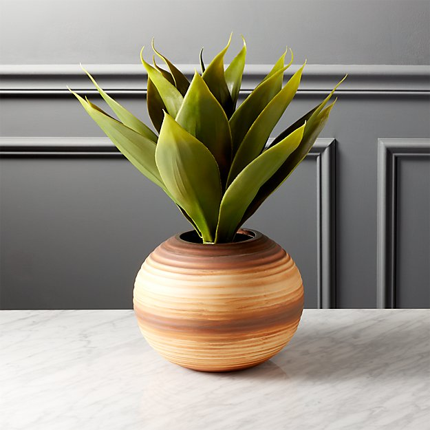 potted sisal