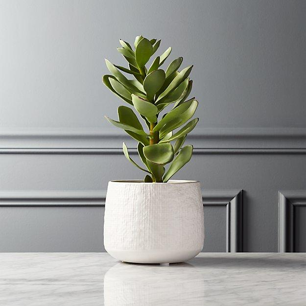 Potted Faux Succulent White Pot + Reviews | CB2