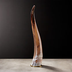 Large Water Buffalo Horn