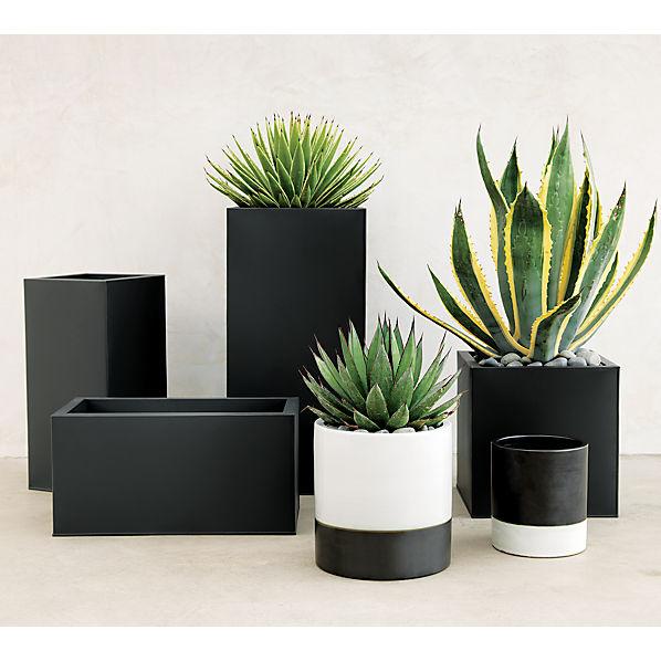 bloxplantersACAP